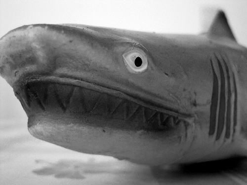If you were watching movies in the late 1970's and into the 1980's, you probably have a fear of sharks.