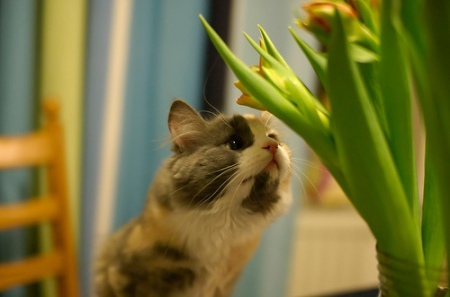 How are you going to find out what a Tulip smells like, if you have no curiosity?