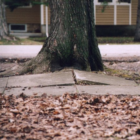 Even a tree doesn't just stand there and complain! Look at what this one did to the sidewalk!