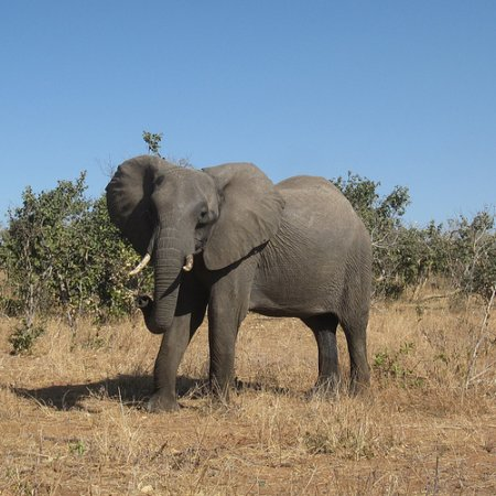 Elephants remember. They remember where the water is in the dry season. That's a wise thing to have linger.